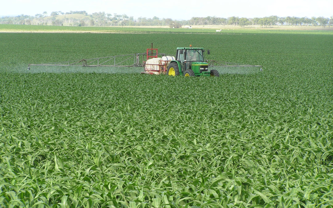 GRDC podcast highlights AFREN resources and fungicide management recommendations