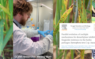 Latest fungicide resistance research has once again reinforced the value of integrated disease management strategies