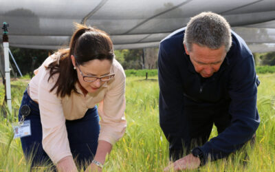AFREN support network to tackle fungicide resistance